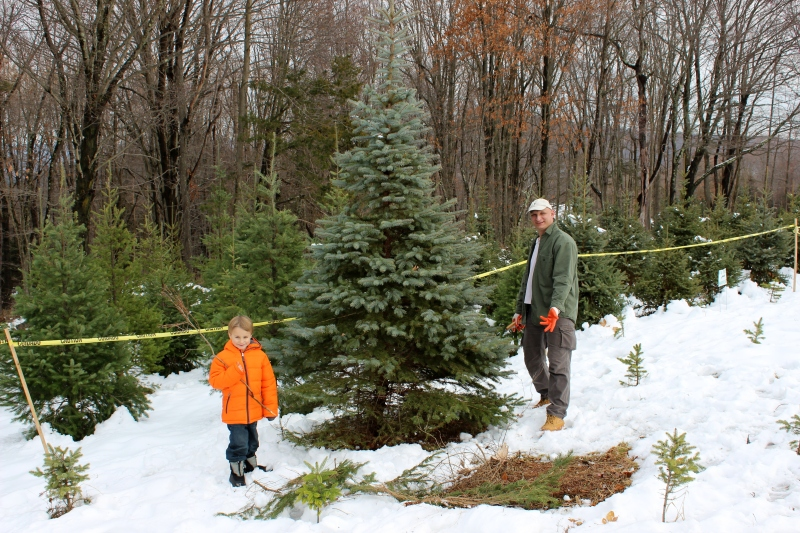 Finding the 'Perfect' Christmas Tree at Windswept Tree ...